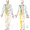 経絡はまず十二正経と任脈・督脈の十四経脈が大事